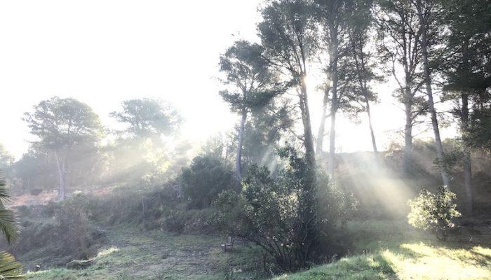 FINCA sun beams