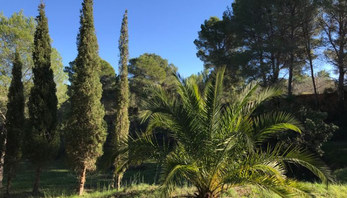 Finca_Vuyatela_House_palm_cypress_9764
