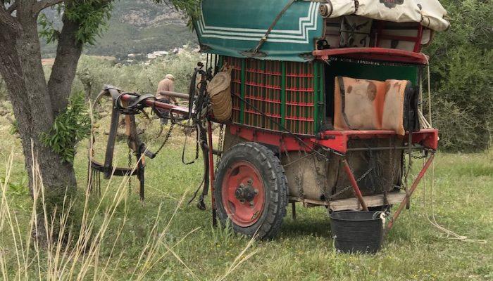 Jávea traditional farmer